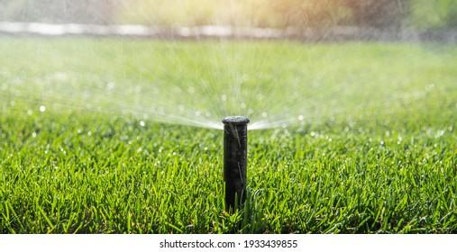 Automatic Garden Sprinkler. Backyard Watering Technology.