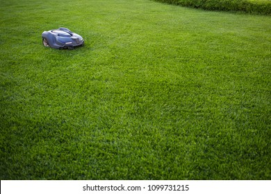 automatic lawn mower robot moves on the grass, lawn. side view from above, copy space