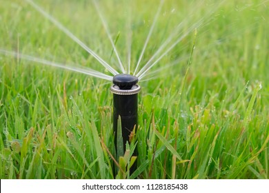 Automatic lawn watering close-up. Spray