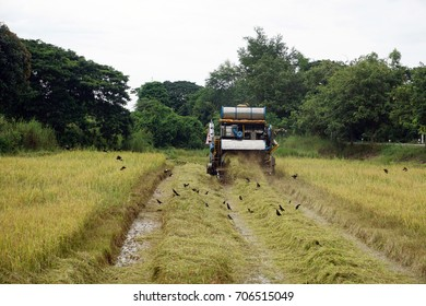 Automatic rice harvester