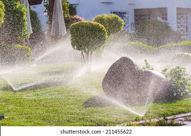 Automatic Sprinkle plants in the garden. Photo for microstock