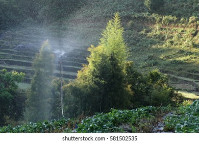 Automatic sprinkler in action watering strawberry farm