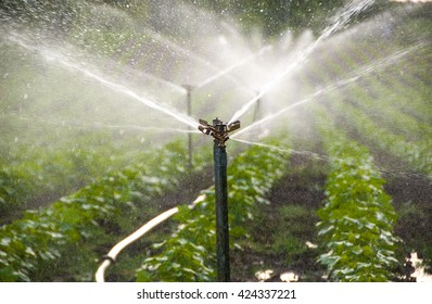 Automatic Sprinkler irrigation system watering in the cotton farm. Maharashtra, India