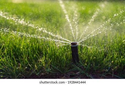 Automatic sprinkler system watering the lawn. Lawn irrigation in public park.
