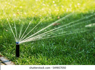 Automatic watering lawns. Gardening.