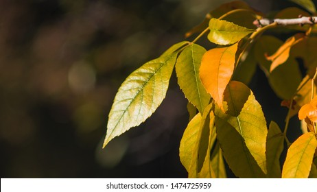 automn Leaf colored green and orange
