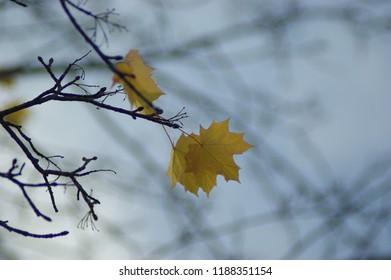 Autum leafs are falling