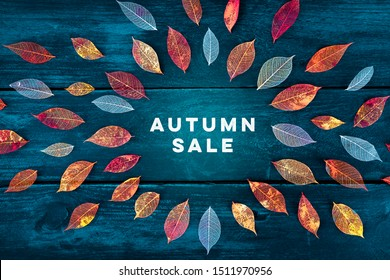 Autum Sale. Discount banner or flyer design template with vibrant autumn leaves and a place for a logo on a dark blue background