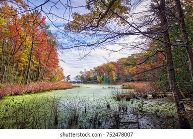 Autum view through the trees of a small lake near the Chesapeake Bay in Maryland wih fall leaves