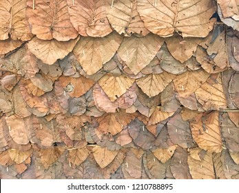 Autume dry leaves brown shade colorful texture background