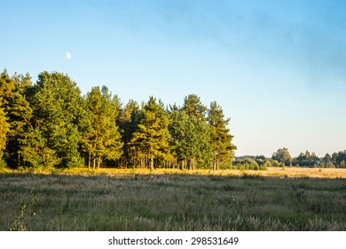 Autumn 2014. Evening. Russia. The suburbs of the Moscow City. The field and the mixed forest in the sunset light of the Sun.