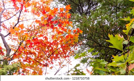 Autumn 2018: Colorful treetops from a small Provincial Park in the Province of Quebec, Canada.