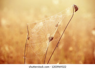 Autumn abstract background with dry plant at sunrise with spiderweb, vintage retro image