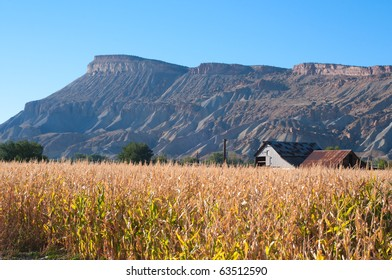 Autumn afternoon by a dry cornfield at Palisade, Colorado with Mt. Garfield in the background