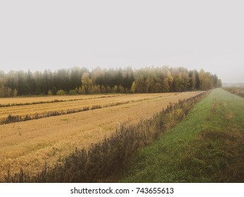 autumn agricultural field at foggy day