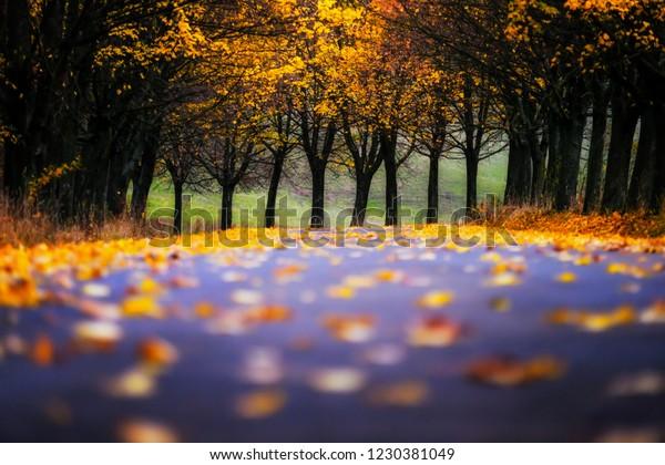autumn alley. Leaves grabbed on the road. liptovsky mikulas, slovakia