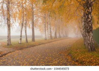 Autumn alley of the park. Carpet of yellow autumn leaves. Park alley in the morning fog
