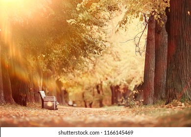 autumn alley in the park / autumn walk in the city park, weekends alone. The concept of calm and autumn freshness among trees and branches with yellow leaves