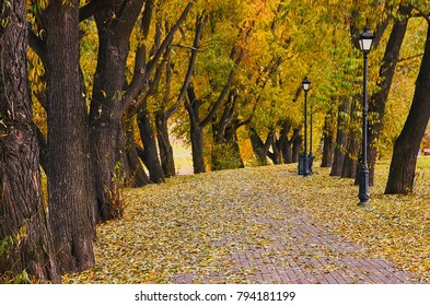 autumn alley, walkway strewn with leaves