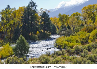 Autumn along the Arkansas River in central Colorado has a beauty all its own, with rust colored shrubs, golden cottonwood and aspen trees and brown cattails.