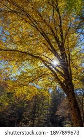 Autumn along the Blue Ridge Parkway in North Carolina.