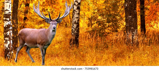 autumn animal  deer