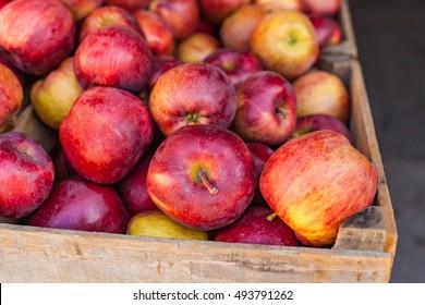 Autumn Apple Varietals from the Farmer's Market