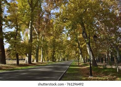 Autumn in Aranjuez, Spain