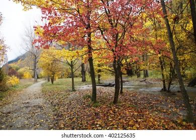 Autumn Arrowtown, New Zealand