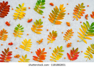 Autumn ashberry tree leaves and fruits on concrete background. Colorful nature flat lay.