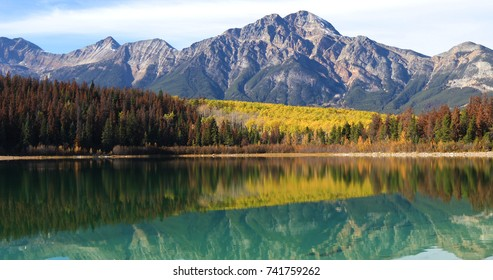 Autumn aspens reflected by the Rocky Mountains, Canada