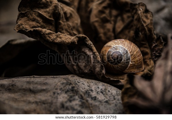 Autumn atmosphere , snail shells and dry leaves