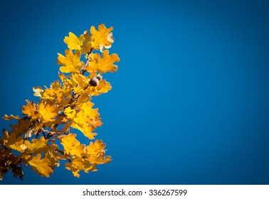 autumn atmosphere: yellow leafs in front of blue sky