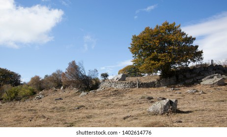 Autumn in Aubrac, Occitanie, France