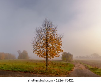 autumn, autumnal, background, beautiful, color, copy space, countryside, crossing, deciduous tree, desktop, fall, field, fog, foggy, foliage, fork, green, idyll, idyllic, impressionism, impressionisti