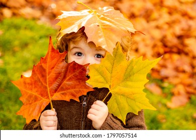Autumn Baby Portrait In Fall Yellow Leaves, Little Child In Woolen Hat, Beautiful Kid in Park Outdoor, Knitted Clothing for October Season - Shutterstock ID 1797057514