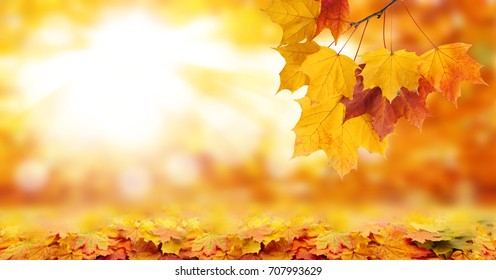 Autumn background and bright yellow leaves product montage display. Mock up for design.
