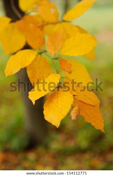 Autumn background. Closeup autumn leaf