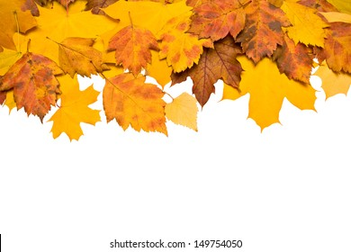 Autumn background of colored leafs border isolated/ With clipping path