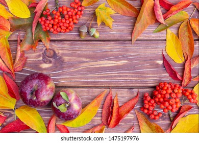 Autumn background with colorful ash-tree and maple leaves, red apples, acorns and ashberry.  Frame of fall harvest with copy space. Mockup for seasonal offers and holiday post card, top view.