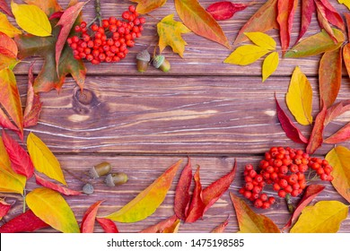 Autumn background with colorful ash-tree and maple leaves, acorns and ashberry.  Frame of fall harvest with copy space. Mockup for seasonal offers and holiday post card, top view.