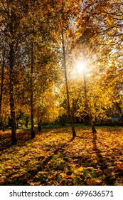 autumn background. colorful foliage in the trees  gloving in sunlight. soft light effect. creative image. beauty in the world.