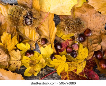 Autumn background of colorful leaves and chestnut