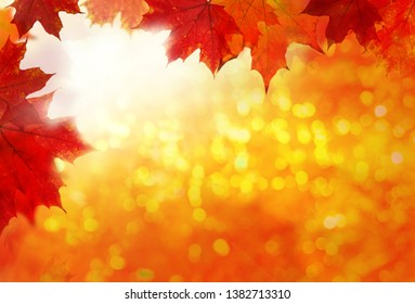 Autumn background. Colorful red fall maple leaves and abstract sun light