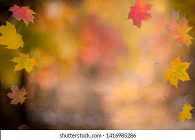 Autumn background. Colorful red fall maple leaves and abstract sun light. Automn day.