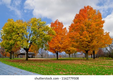 Autumn background with colorful trees changing leaves in Minnesota
