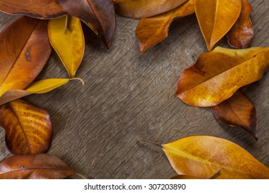 Autumn background with colorful yellow orange leaves of magnolia on wooden background. Fall theme, Autumn concept background with yellow fall leaves and copy space