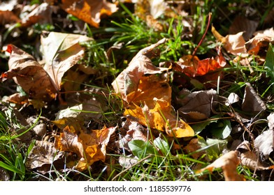 Autumn background with dry orange leaves and grass
