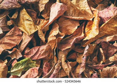 Autumn background. Dry yellow and red leaves texture.