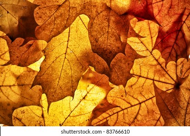 Autumn background from the fallen down leaves.